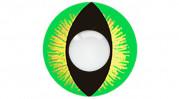 green reptile contacts closeup